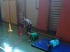 V telovadnici